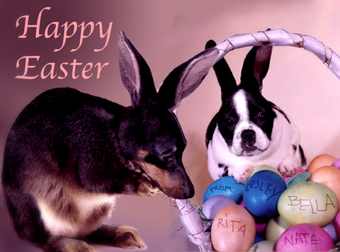 Eastercardflat